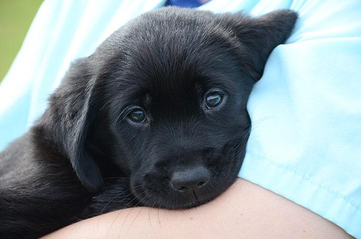 """A """"szeretethormon"""" érzékelésének genetikai háttere is befolyásolja, hogyan barátkozik a kutya az emberrel"""