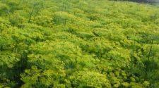 Kozmetikumok, biotechnológia és növényi gyógyszerek alapanyaga, fűszernövények kivonata készül biotechnológiával a Tolna megyei Bikácson.