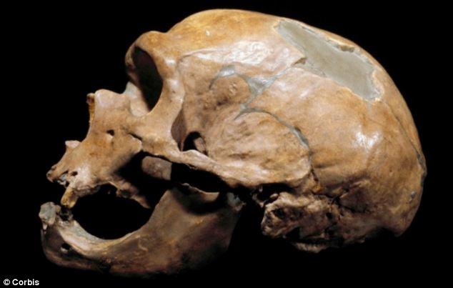 neandervölgyi ősöktől örökölt vírusok
