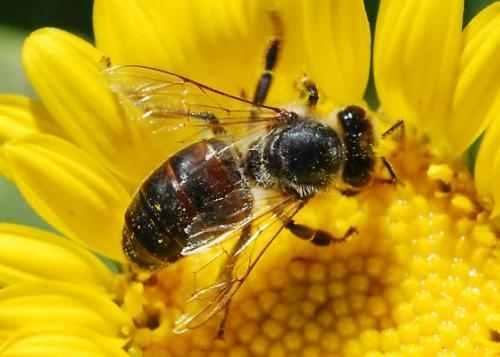 A rovarirtó szerek betiltása a méhek védelméért.