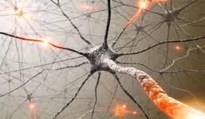 A gátló idegsejtek egyedülálló vizsgálati módszerét dolgozták ki