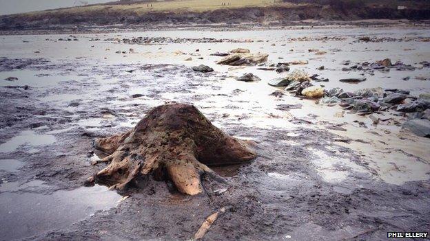 Ősi erdők nyomait hozták felszínre a viharok Nagy-Britanniában