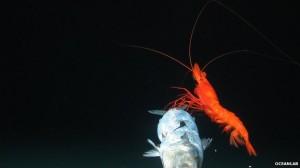 Először készített felvételeket a Csendes-óceán egyik legmélyebb pontja, a több mint 7 kilométer mély Új-Hebridák-árok élővilágáról egy nemzetközi kutatócsoport.
