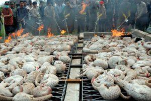 Megdöbbentő méretű a tobzoskák illegális kereskedelme