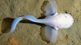 Felfedezték, miért nem úszhatnak mélyebbre a halak
