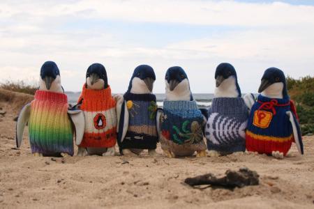 Pulóverekkel segítenek az olajtól maszatos pingvineken egy ausztrál szigeten
