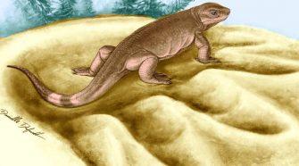 A növényevő állatok ősét fedezték fel kanadai tudósok - Eocasea-martini