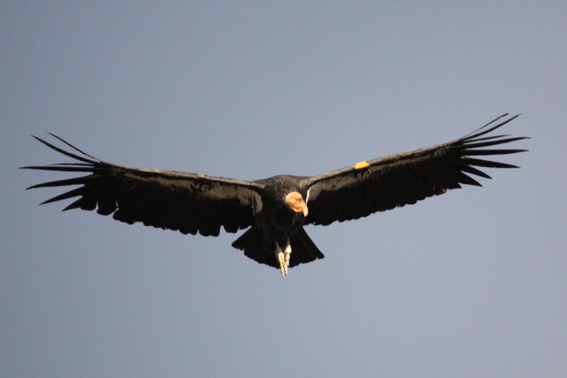 Kész a kihalófélben lévő egzotikus madarak százas listája