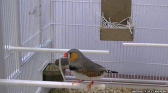 A madarak megtanulják, melyik anyag hasznosabb a fészekrakáshoz