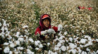 Gémmódosított növényekkel próbálkoznak Kínában