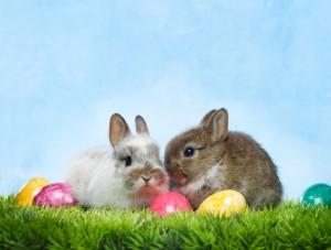 Nyuszik és tojások