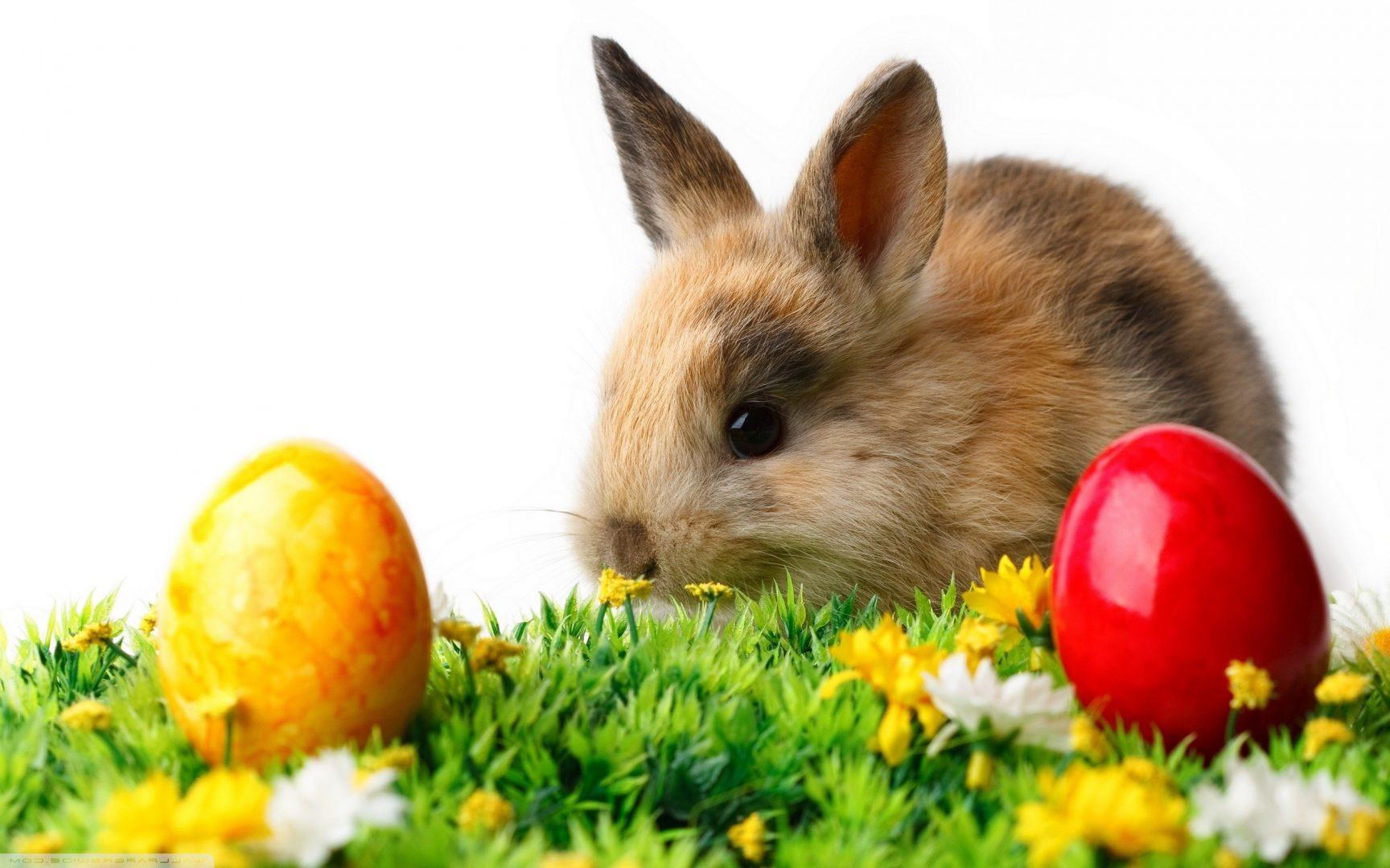 A húsvéti nyúl eredete