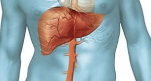 A karbamidciklus-zavar, zavarok a máj ammónia-anyagcseréjét (NH3) érintő súlyos és életveszélyes betegségek.
