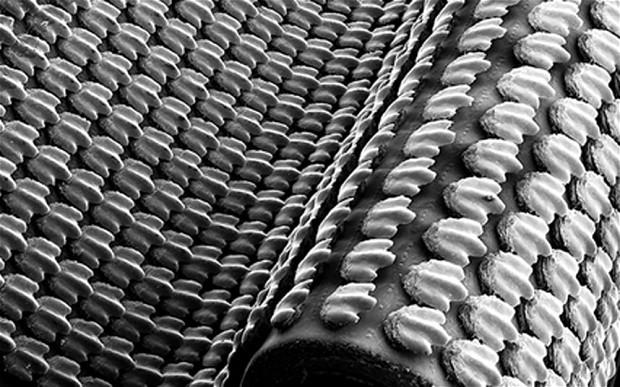 """áromdimenziós nyomtatóval készült modellen mutatták be tudósok, hogy milyen hatékonyan segítit a """"fogazatszerű"""" bőrlapocskák borította cápabőr a ragadozó úszását."""