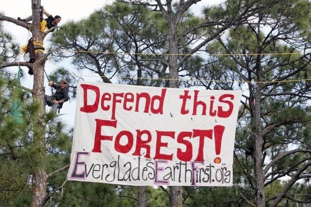 Fa - nyolc érdekes tény a fákról