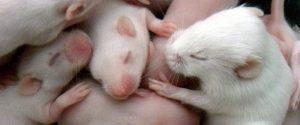 Egereken tesztelték - a természetes születés erősíti az immunrendszert