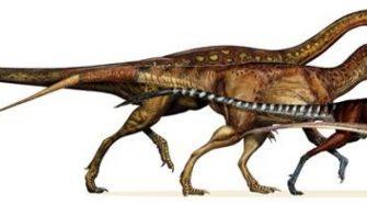 Dinoszauruszokból alakult ki a legtöbb madár