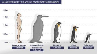 Antarktiszi óriáspingvin - TUDOMÁNYPLÁZA - Élővilág