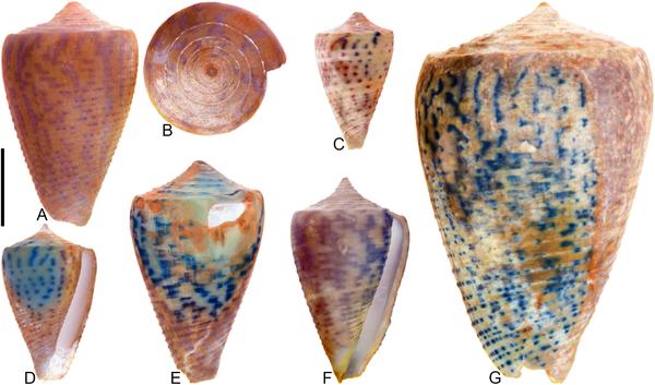 Az ősi kagylók UV-fényben színesek