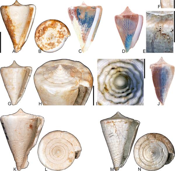 Az ősi kagylókat vizsgáltak - UV-fényben színesek