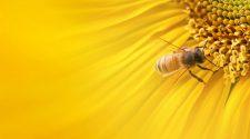 Dongók és virágok