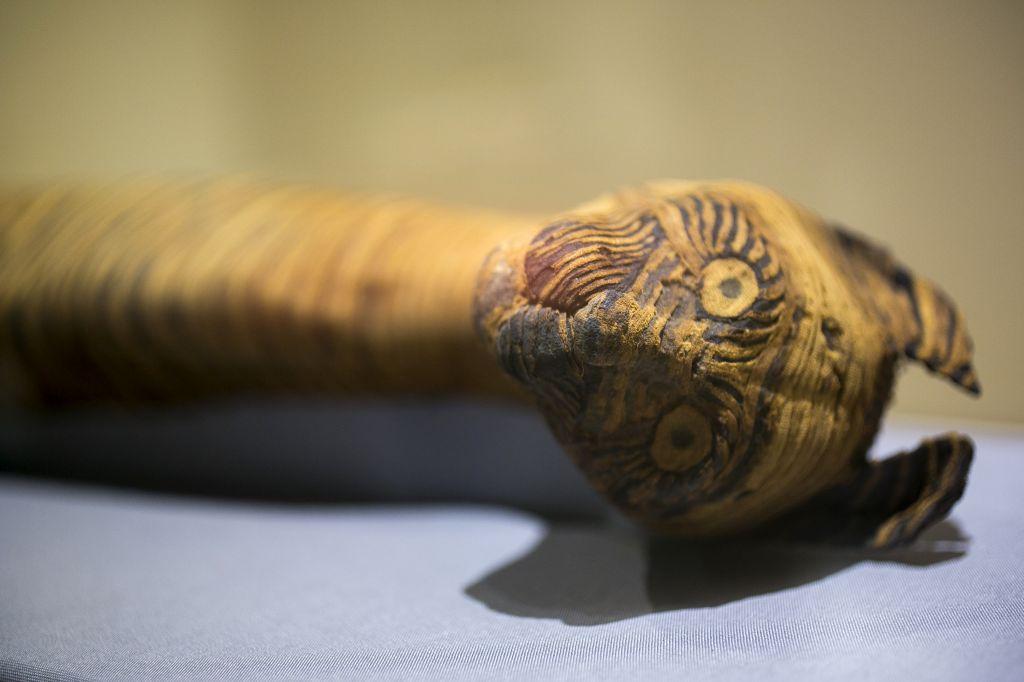 Az óegyiptomi balzsamozók praktikáira derült fény a Manchesteri Múzeum és a Manchesteri Egyetem kutatóinak köszönhetően, akik állatmúmiák röntgen- és CT-vizsgálata során kimutatták, hogy az esetek harmadában a pólyák üresek.