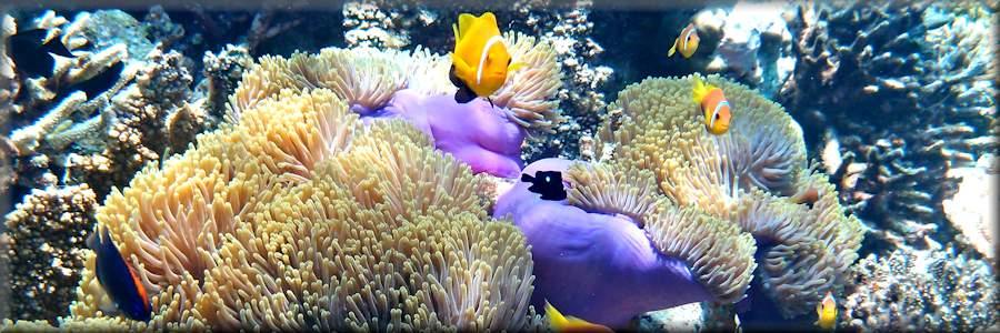 Nagy-korallzátony - kis halál