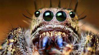Halálos pókok