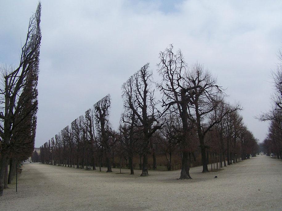 Elképesztő fényképek-A Schönbrunn Park fái