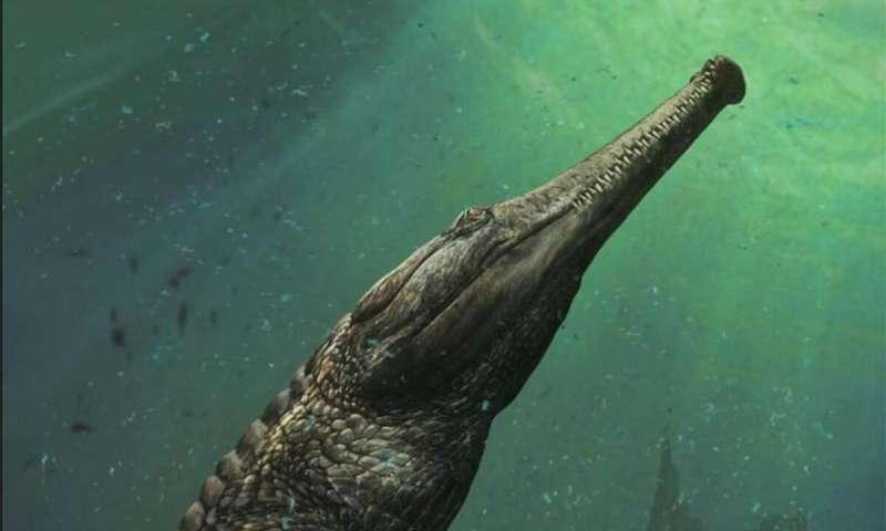 Előkerült a legnagyobb krokodil