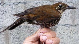 Új madárfajt fedeztek fel Indiában