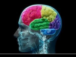 A kétnyelvűség stimulálja az agyműködést.