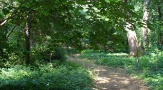 Megújult a Tiszaigari Arborétum