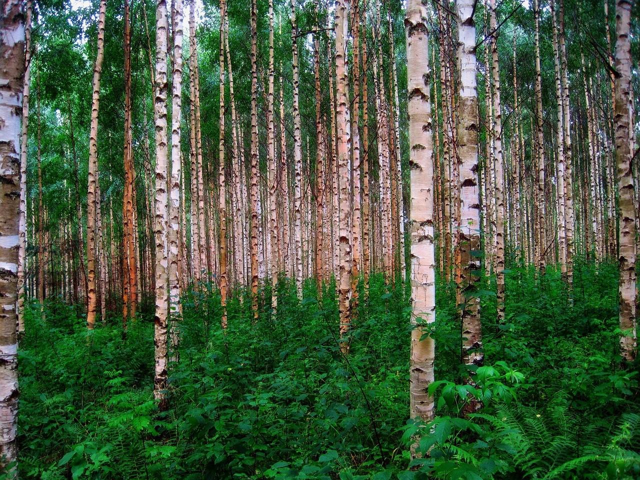 Egy magyar-finn-osztrák kutatócsoport szerint alszanak a fák.