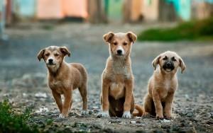 Miért zavaró a kutyaugatás?