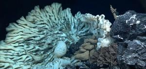 Felfedezték a világ legnagyobb szivacsát