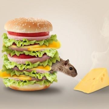 Nem létezik a mindenki számára egyformán jó diéta