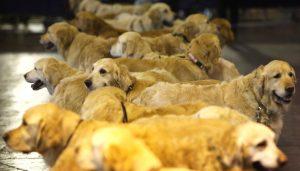 A kutyák agya az emberéhez hasonlóan dolgozza fel a beszédet