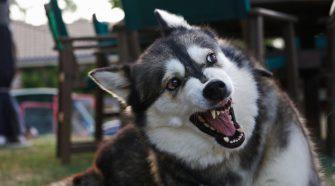 Egy nő vagy egy férfi ijesztőbb a kutya számára?