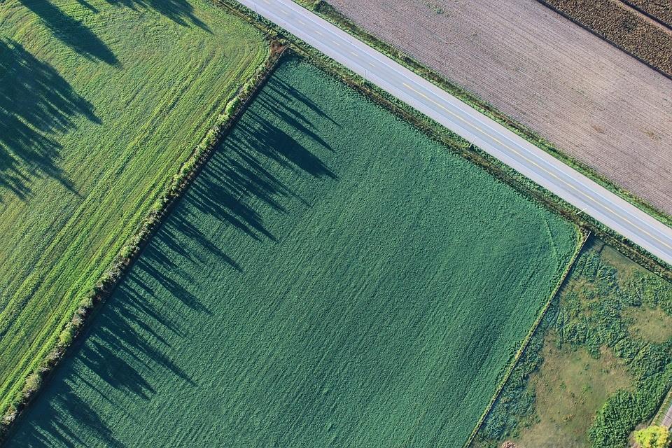 mezőgazdasági termelés