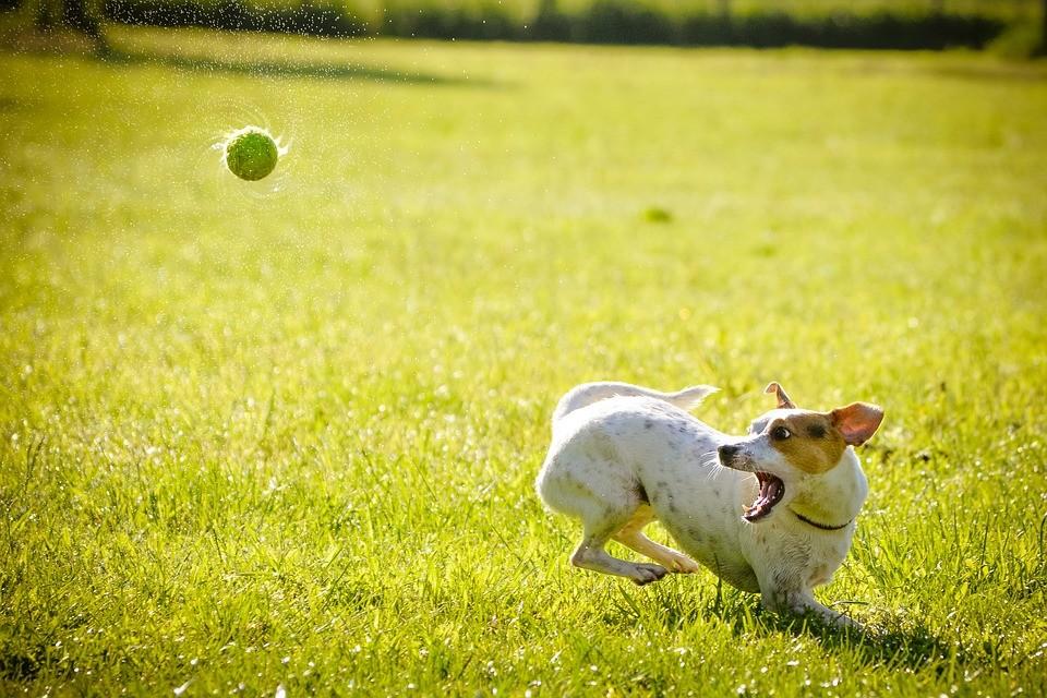A kutyák látását az eddigi etológiai kutatások többsége figyelmen kívül hagyta?