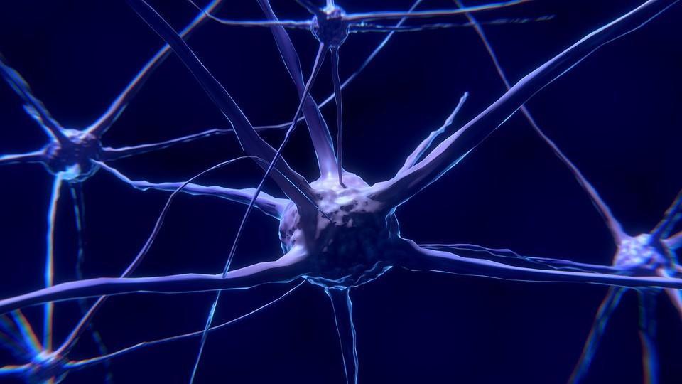 Az idegrendszer fejlődésének új eredményei