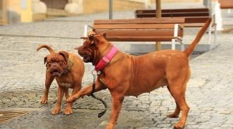 Kutyamorgás és kutyabeszéd