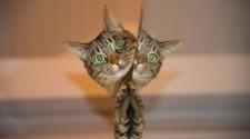 Macska evolúció és térhódítás - TUDOMÁNYPLÁZA - Élővilág