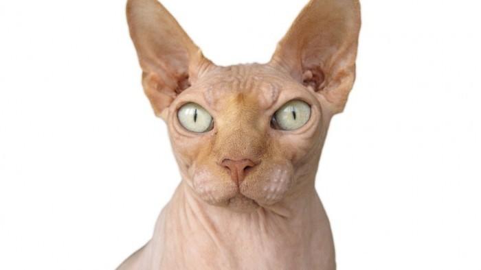 Macska evolúció és térhódítás