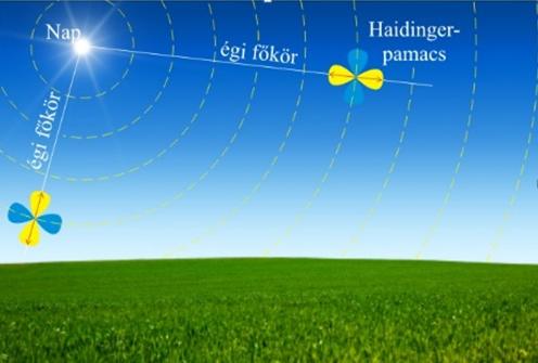 A sárga Haidinger-pamacs hossztengelye mindig a Nap felé mutat