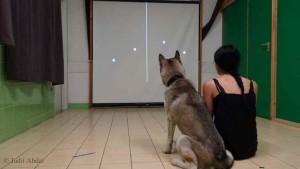 Élő vagy élettelen? A kutyák emberien észlelik
