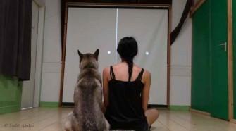 Élő vagy élettelen? A kutyák emberien észlelik 1