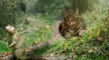 Szigeteken él a súlyosan fenyegetett gerinces fajok csaknem fele