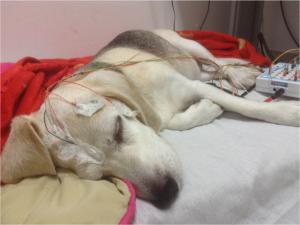 kutyák alvási orsói